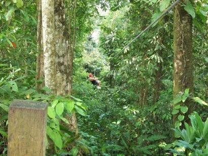 mexico-jungle