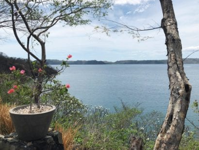 Flowers and body of water in Costa Rica
