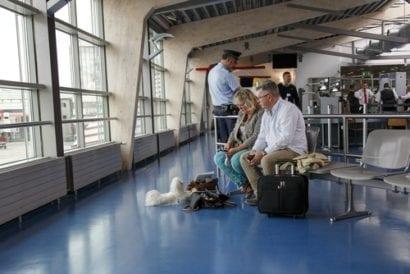 travel talk dog