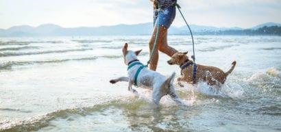 travel talk dogs