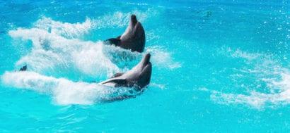 Riviera Maya dolphins
