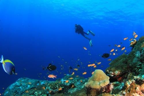 Riviera Maya scuba dive