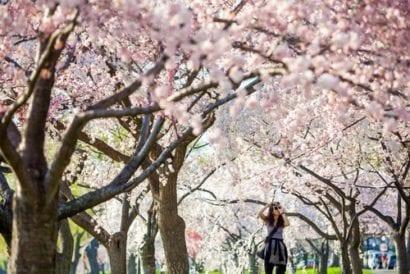 Spring flowers - dc