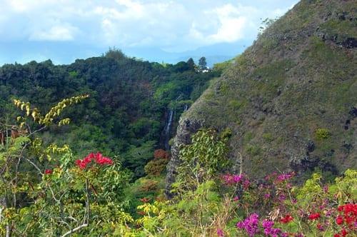 spring flowers - kauai