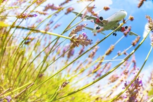 spring travel flowers