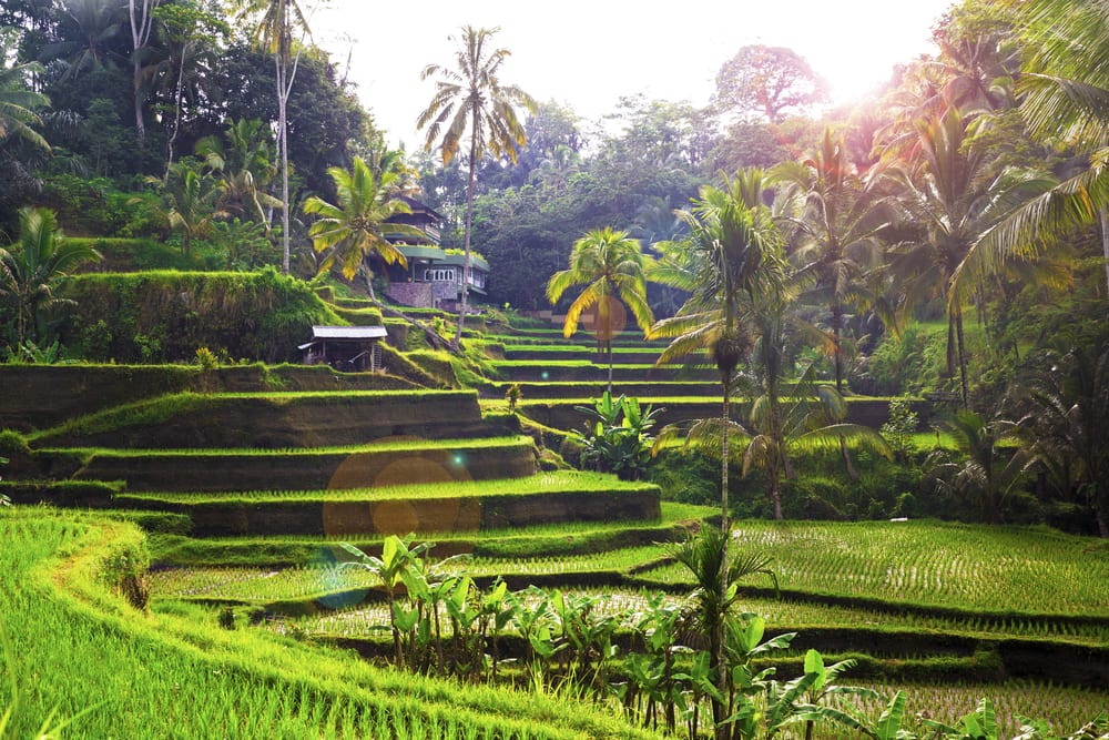 First-Timers' Guide to Bali