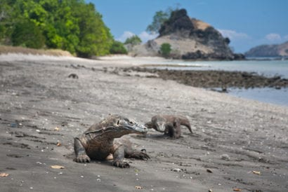 travel talk oct 2 - komodo island