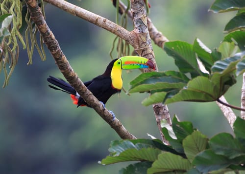 Costa Rica Travel: Visit the Pura Vida Country