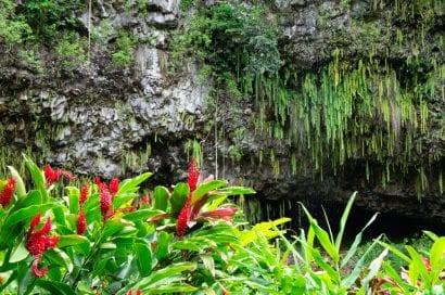 kauai fern grotto